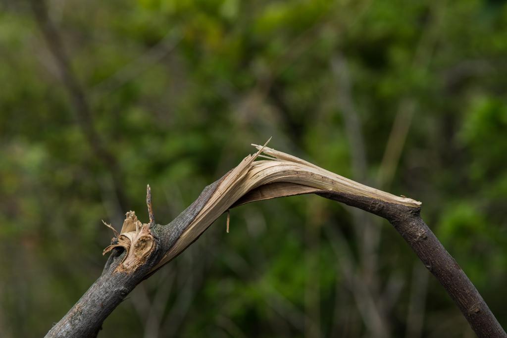 到处都是被折断的树枝